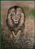 Aanvallende leeuw