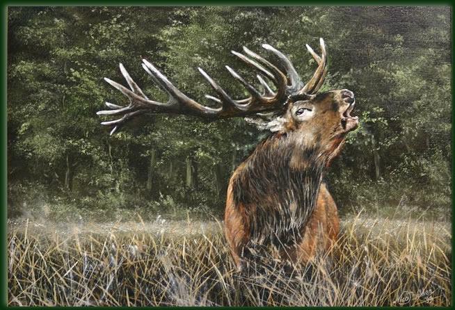 Roaring Red Deer Nico Bulder Wildlife Painter