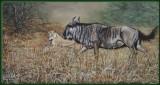 Jagende leeuwin