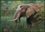 Olifanten bull