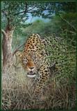 Sluipend luipaard