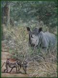 Witte neushoorn en bavianen