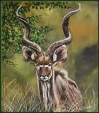 portret Kudu