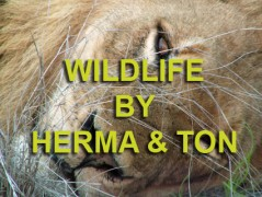 Wildlife Photos by Herma & Ton