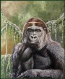 'Gorrie' the Gorilla